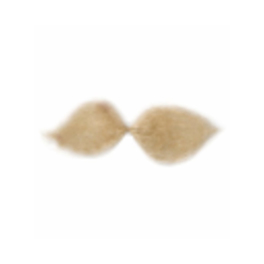 Moustache blonde Schnauzer